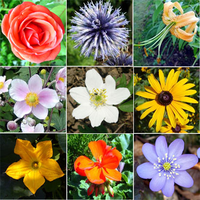 Types of Flowers